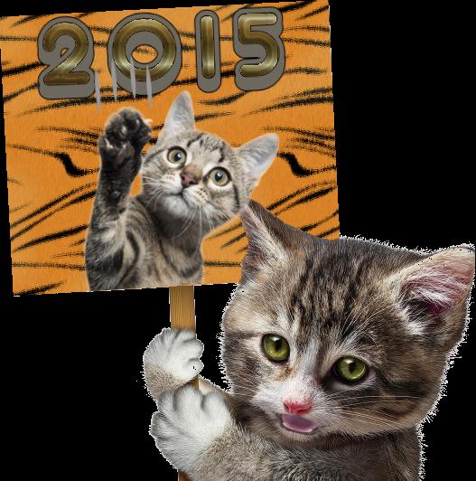 Gato cartel 2015