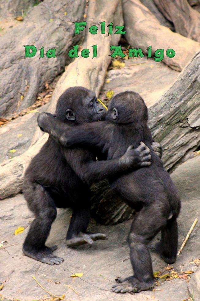 Feliz día del amigo monos